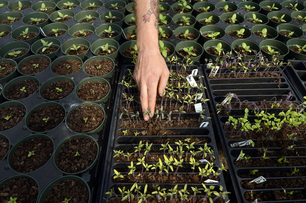 From restaurant to farm: Planting seeds brings his dream to fruition | CharlotteObserver.com & The Charlotte Observer Newspaper